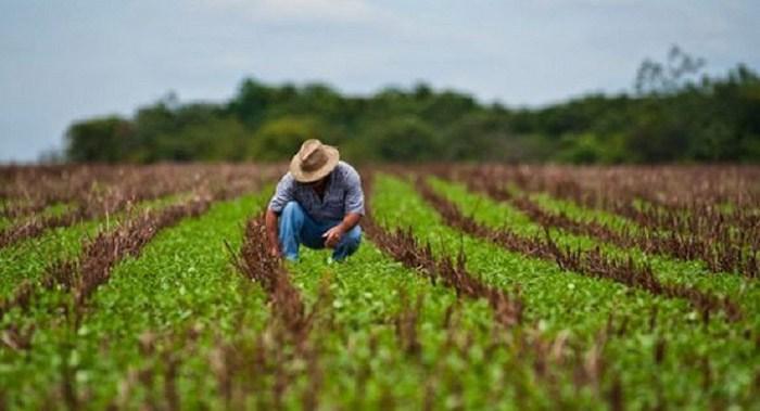 CREA deve conceder registro profissional a técnico em agropecuária