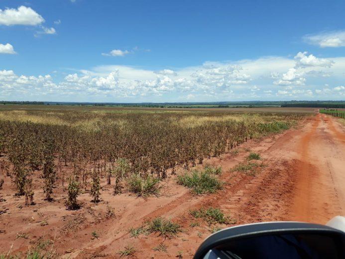 Quebra na safra da soja gera mais de R$ 160 milhões em prejuízo para região