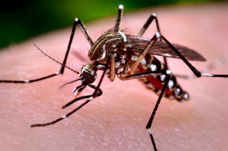 Presidente do Cisa-Amerios convoca  municípios a travarem guerra contra a dengue