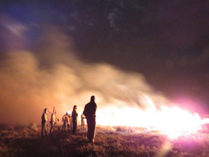 Parque Nacional de Ilha Grande arde em chamas