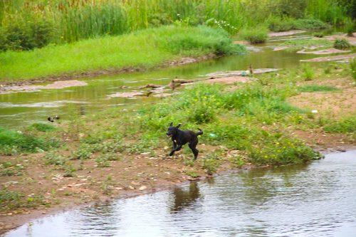 lago-cachorro