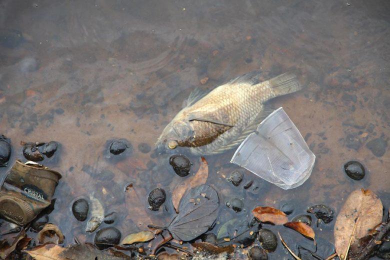 Peixes agonizam e Lago Aratimbó continua sofrendo com poluição e assoreamento