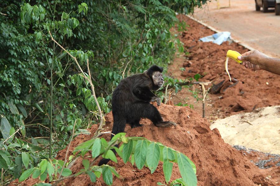 bairro-primeiro-de-maio-macacos