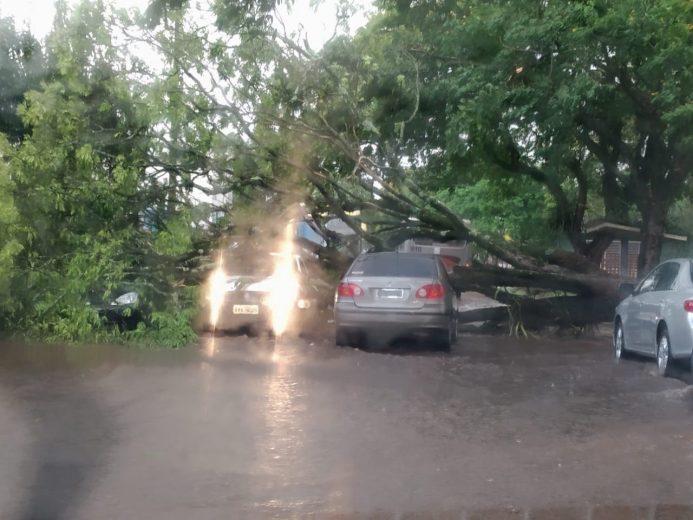 Árvore cai sobre três veículos na rua Arapongas, em Umuarama