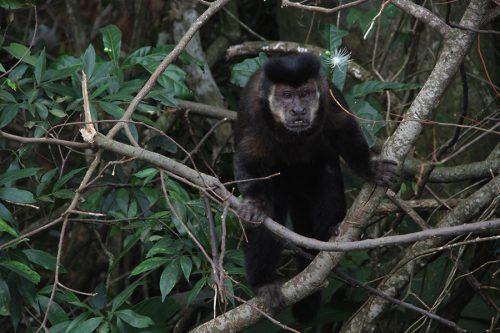 macaco-fome-umuarama