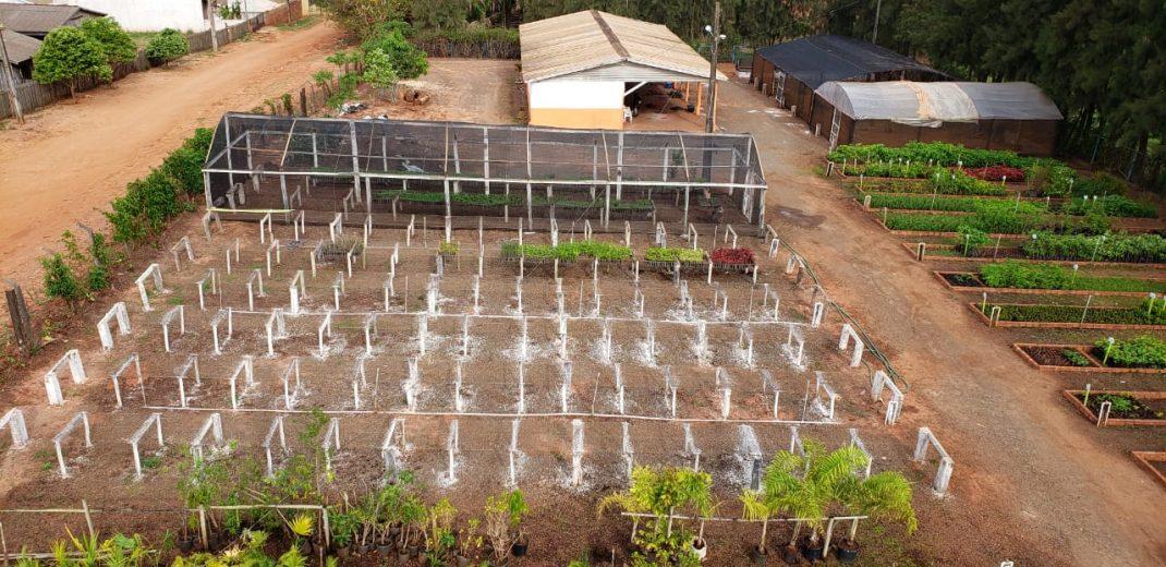 Viveiro Municipal produz as plantas que embelezam Cruzeiro do Oeste