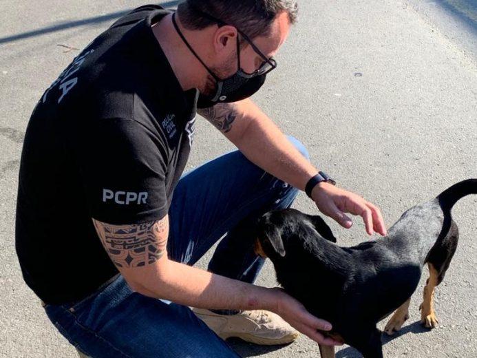 Homem filma sexo com cachorro e é acusado de maus tratos