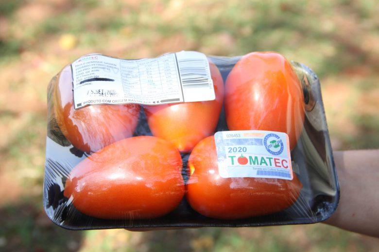 Agricultores da região inovam produzindo tomate seguindo os eixos da sustentabilidade