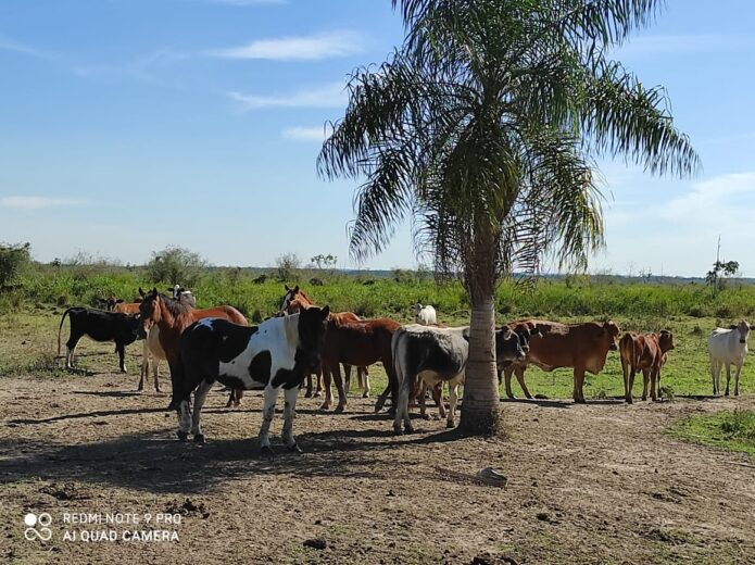 Produtor é multado em R$ 30 mil por manter gado em área de conservação em São Jorge