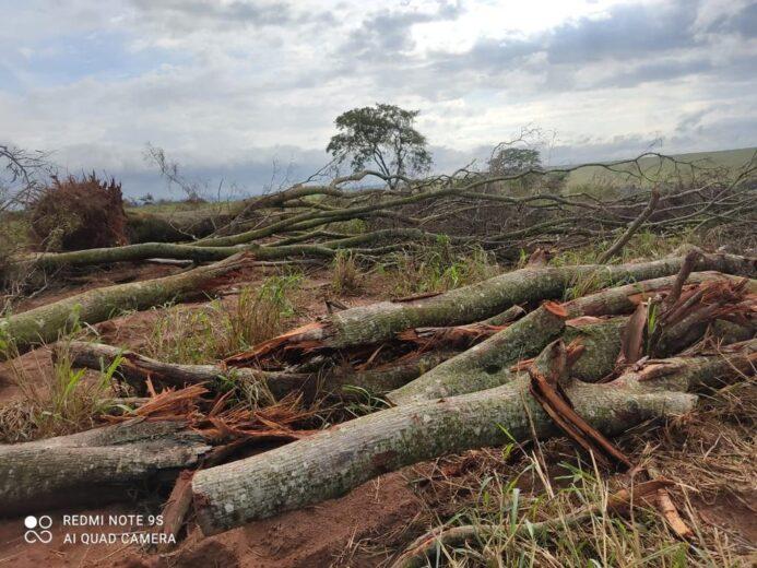IAT flagra derrubada de 27 ha mata nativa em Alto Paraíso