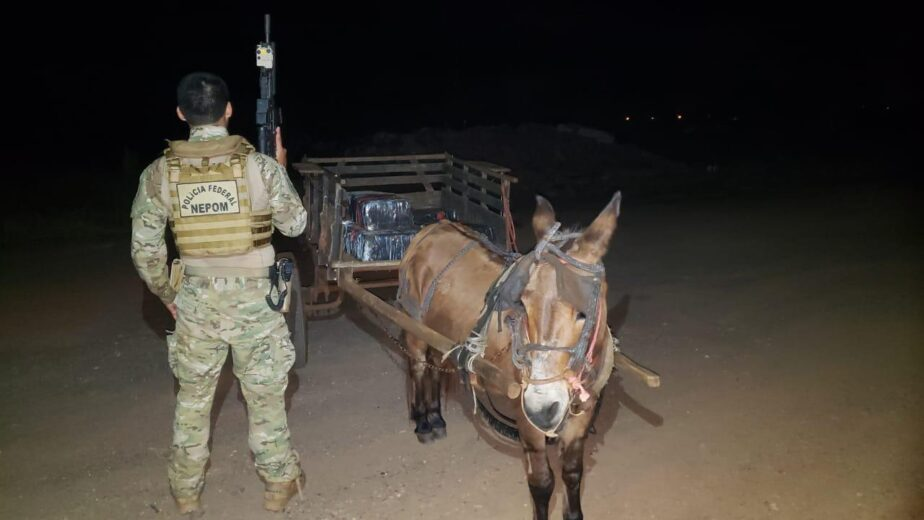 Traficantes usavam carroça puxada por um burro para transportar maconha